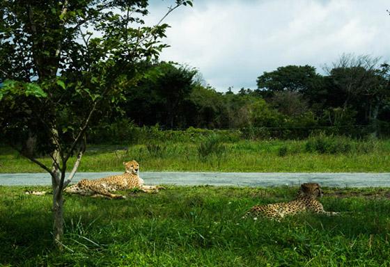 safari2015010.jpg