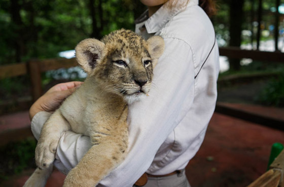 safari201503.jpg