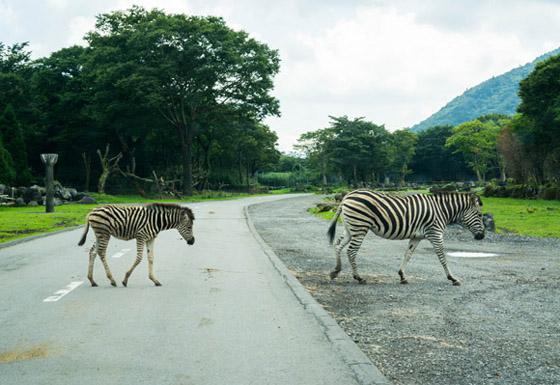 safari201505.jpg