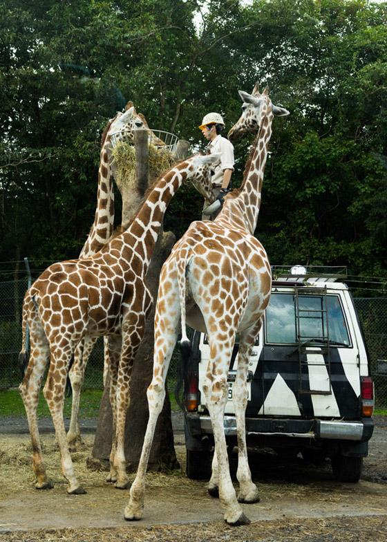 safari201507.jpg