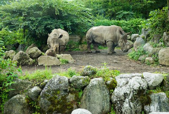 safari201508.jpg