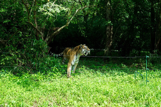 safari201511.jpg