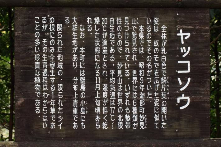 151101-141.jpg