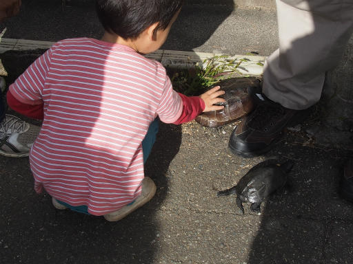 20151025・松之山カメさん11