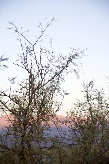 blog 395S-168E-190E Death Valley, Mesquite Flat Sand Dunes, Mesquite Tree, CA_DSC0061-11.29.09.(4).jpg